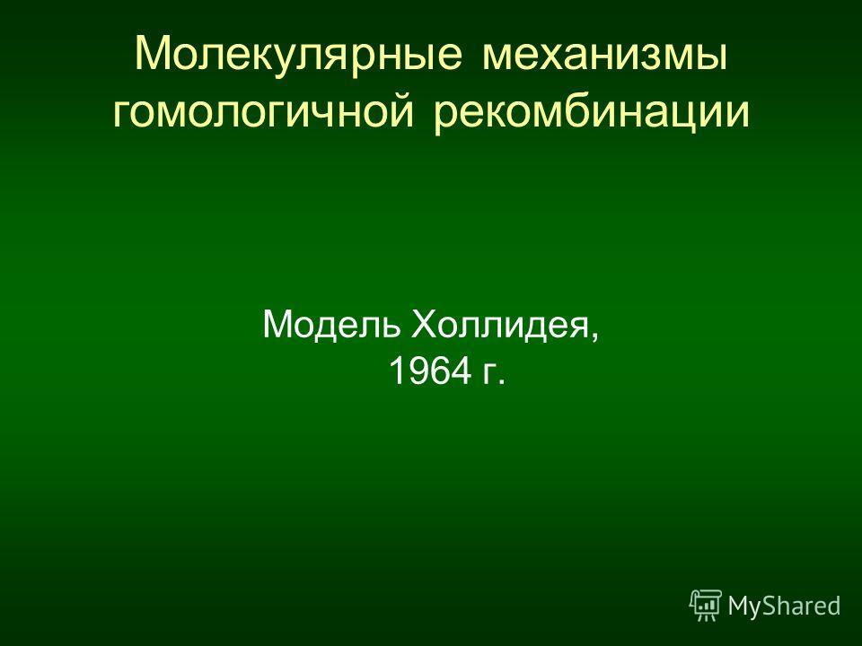 Молекулярные механизмы гомологичной рекомбинации Модель Холлидея, 1964 г.