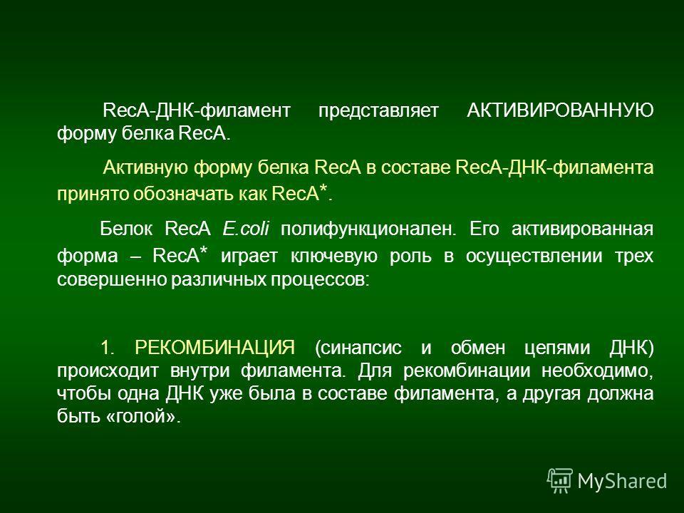 RecA-ДНК-филамент представляет АКТИВИРОВАННУЮ форму белка RecA. Активную форму белка RecA в составе RecA-ДНК-филамента принято обозначать как RecA *. Белок RecA E.coli полифункционален. Его активированная форма – RecA * играет ключевую роль в осущест