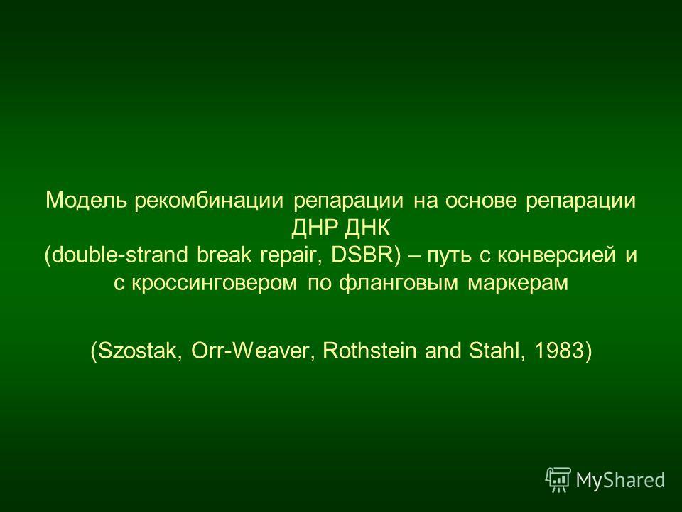 Модель рекомбинации репарации на основе репарации ДНР ДНК (double-strand break repair, DSBR) – путь с конверсией и с кроссинговером по фланговым маркерам (Szostak, Orr-Weaver, Rothstein and Stahl, 1983)