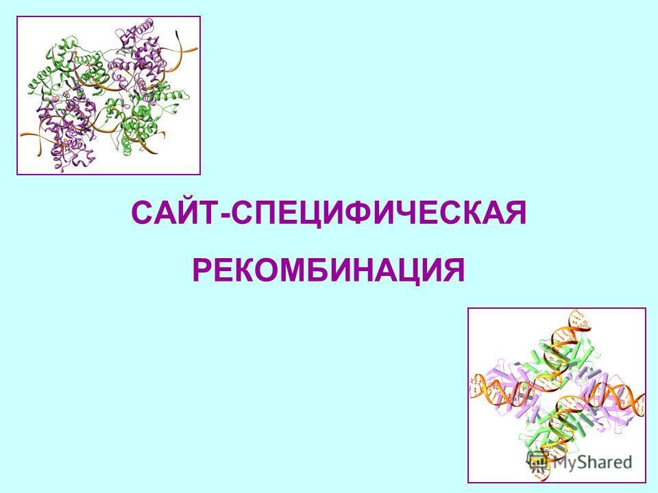 CАЙТ-СПЕЦИФИЧЕСКАЯ РЕКОМБИНАЦИЯ