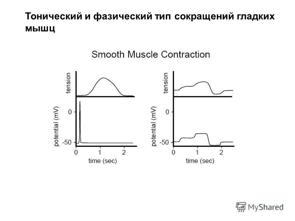 Тонический и фазический тип сокращений гладких мышц