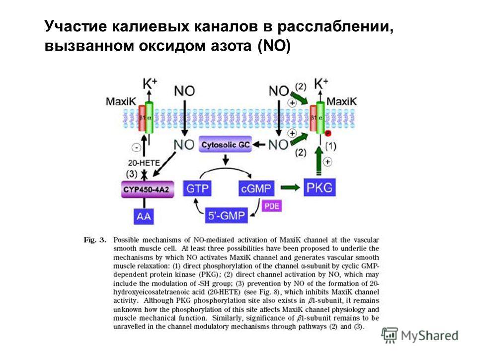 Участие калиевых каналов в расслаблении, вызванном оксидом азота (NO)
