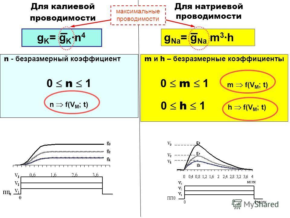 m и h – безразмерные коэффициенты 0 m 1 m f(V M ; t) 0 h 1 h f(V M ; t) g Na = g Na m 3 ·h Для натриевой проводимости n - безразмерный коэффициент 0 n 1 n f(V M ; t) g K = g K ·n 4 Для калиевой проводимости максимальные проводимости