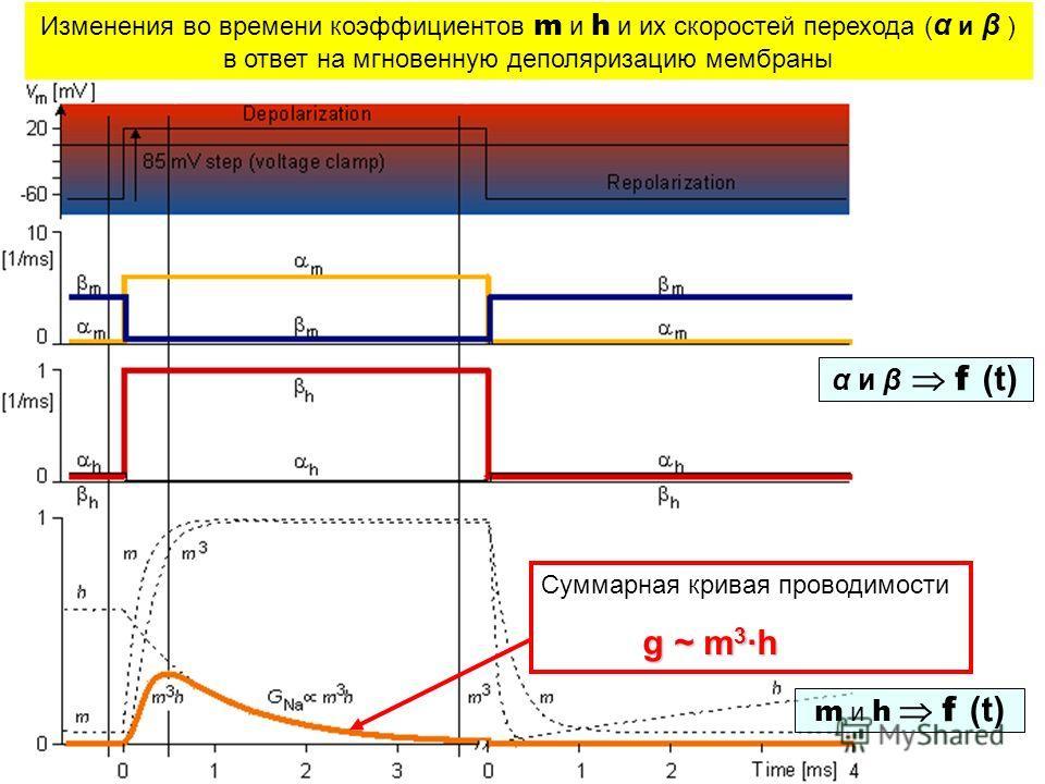 m и h f (t) Изменения во времени коэффициентов m и h и их скоростей перехода ( α и β ) в ответ на мгновенную деполяризацию мембраны α и β f (t) Суммарная кривая проводимости g ~ m 3 ·h