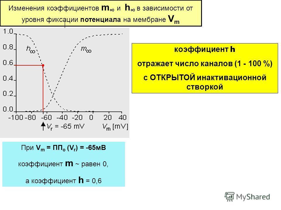 Изменения коэффициентов m и h в зависимости от уровня фиксации потенциала на мембране V m При V m = ПП о (V r ) = -65мВ коэффициент m ~ равен 0, а коэффициент h = 0,6 коэффициент h отражает число каналов (1 - 100 %) с ОТКРЫТОЙ инактивационной створко
