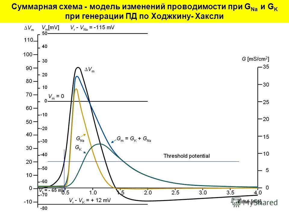 Суммарная схема - модель изменений проводимости при G Na и G K при генерации ПД по Ходжкину- Хаксли