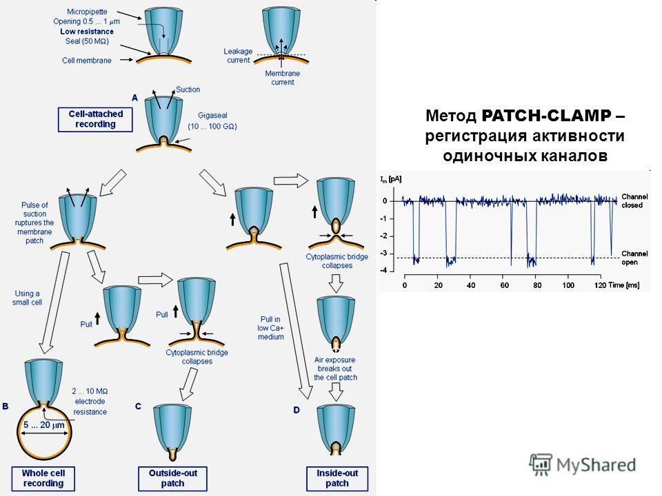 Метод PATCH-CLAMP – регистрация активности одиночных каналов