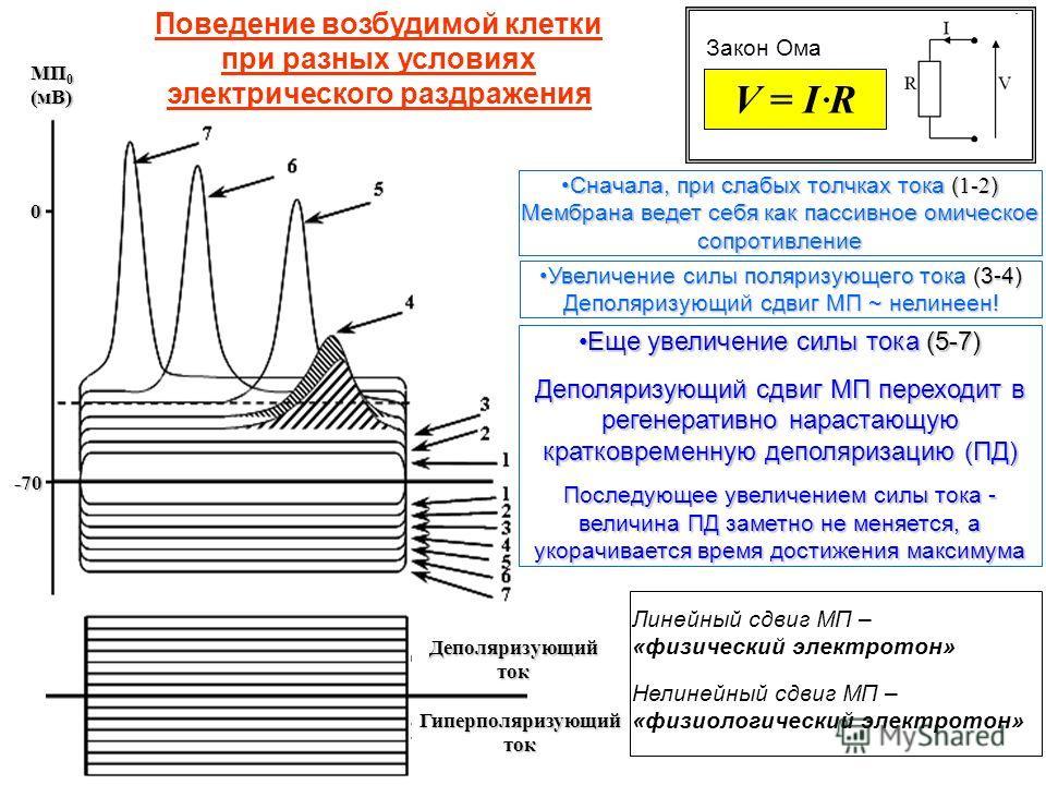 Закон Ома V = I R Сначала, при слабых толчках тока ( 1-2 ) Мембрана ведет себя как пассивное омическое сопротивлениеСначала, при слабых толчках тока ( 1-2 ) Мембрана ведет себя как пассивное омическое сопротивление Деполяризующий ток Гиперполяризующи