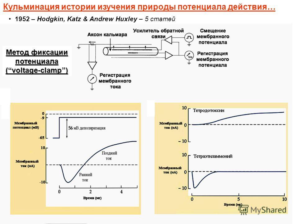 Кульминация истории изучения природы потенциала действия… 1952 – Hodgkin, Katz & Andrew Huxley – 5 статей Метод фиксации потенциала (voltage-clamp)