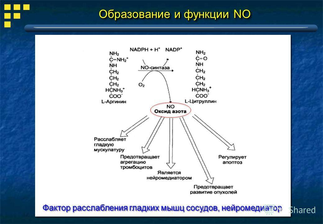 Образование и функции NO Фактор расслабления гладких мышц сосудов, нейромедиатор