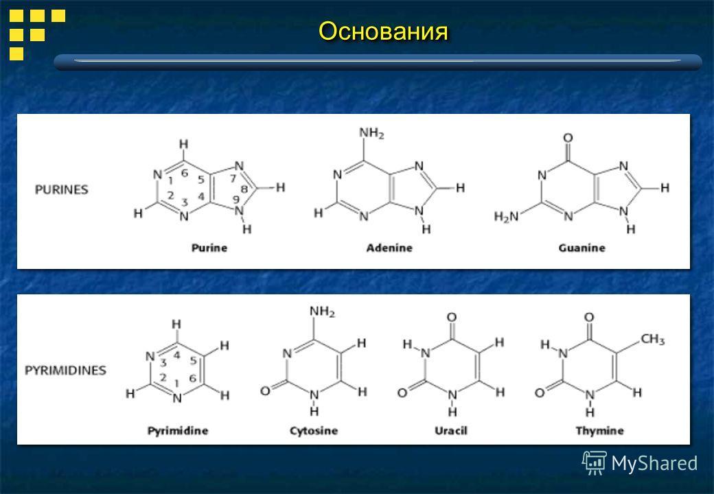 purine sythesis