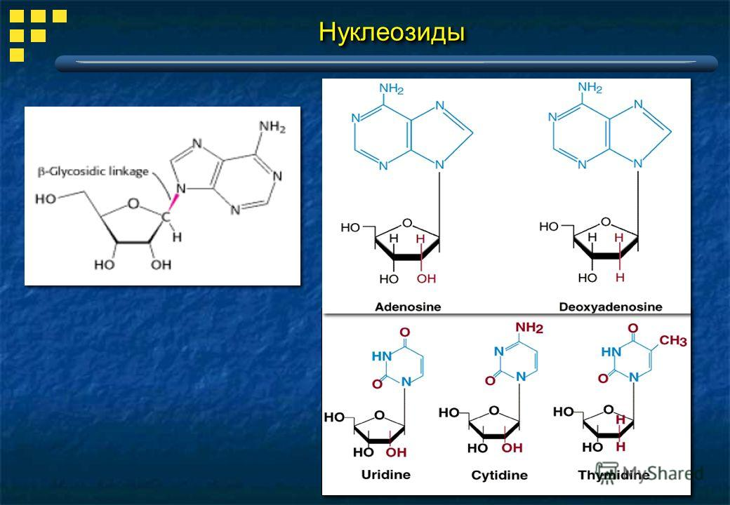 НуклеозидыНуклеозиды