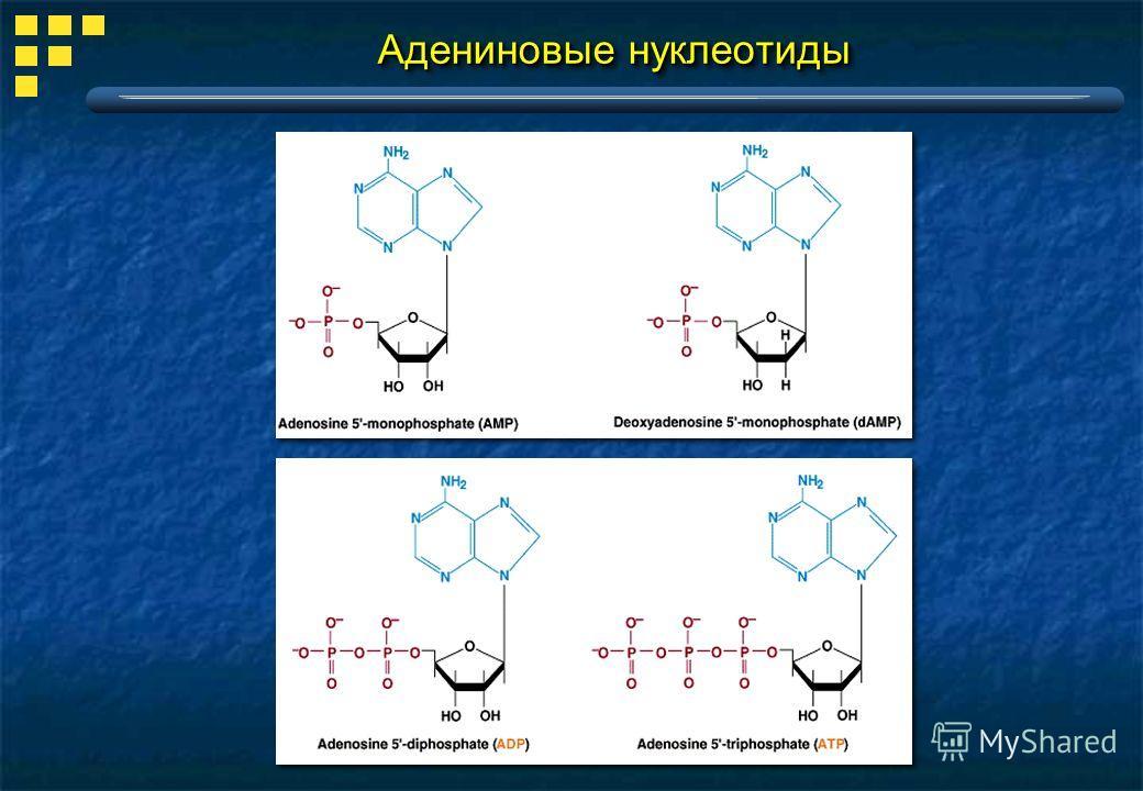 Адениновые нуклеотиды