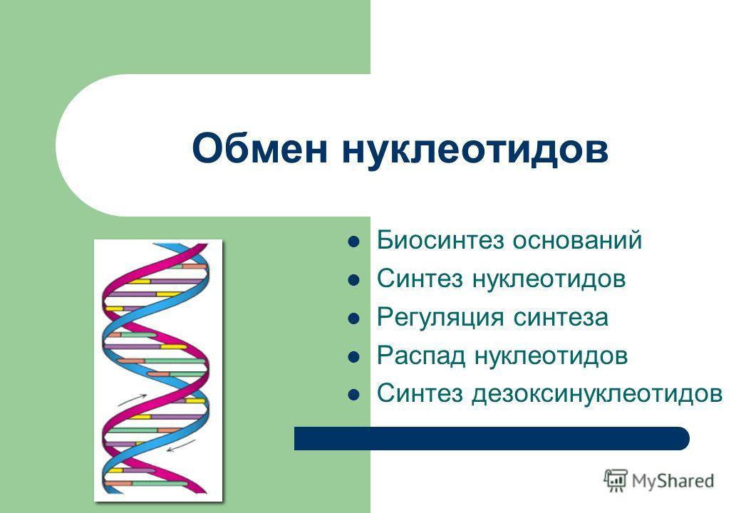 Обмен нуклеотидов Биосинтез оснований Синтез нуклеотидов Регуляция синтеза Распад нуклеотидов Синтез дезоксинуклеотидов