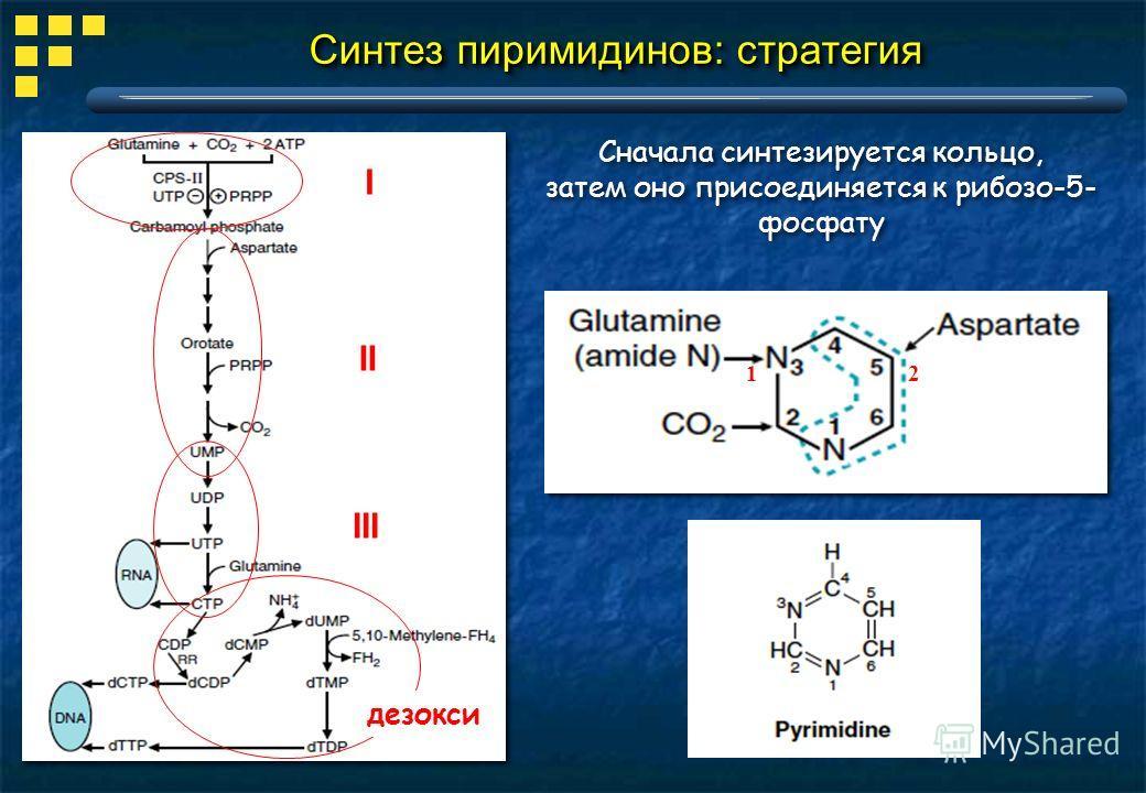 Cинтез пиримидинов: стратегия Сначала синтезируется кольцо, затем оно присоединяется к рибозо-5- фосфату Сначала синтезируется кольцо, затем оно присоединяется к рибозо-5- фосфату I II III 21 дезокси