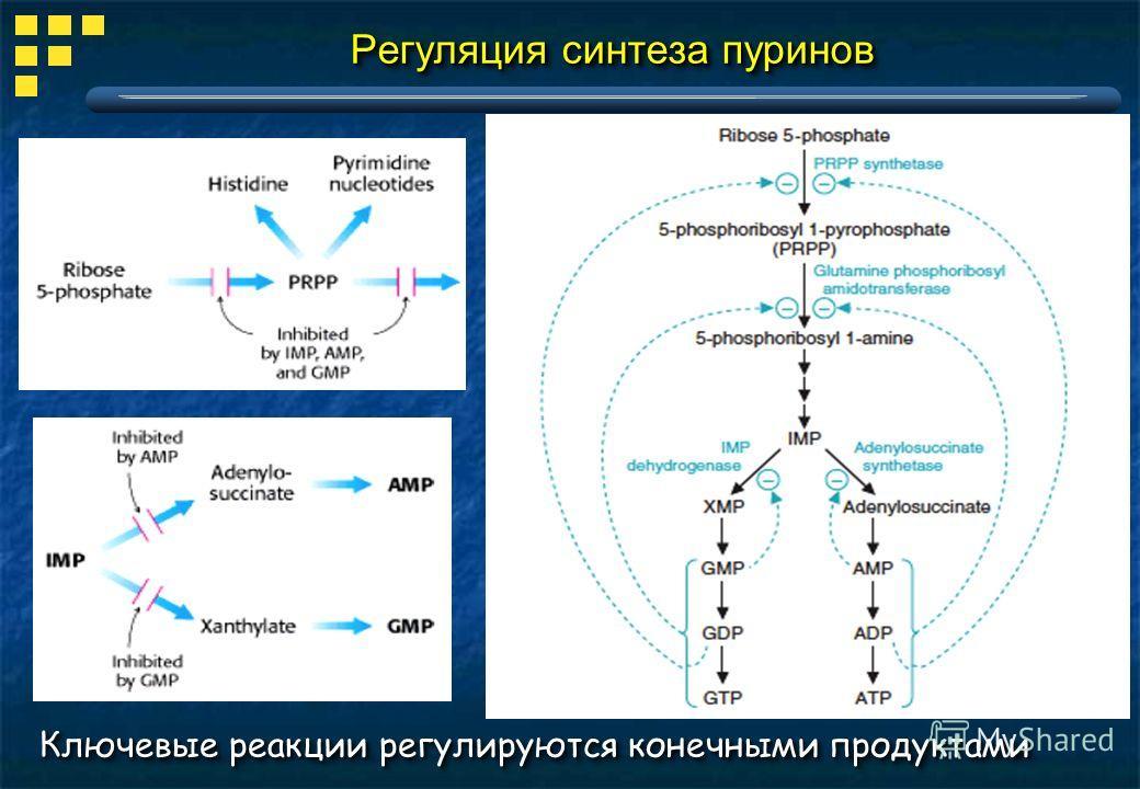 Регуляция синтеза пуринов Ключевые реакции регулируются конечными продуктами