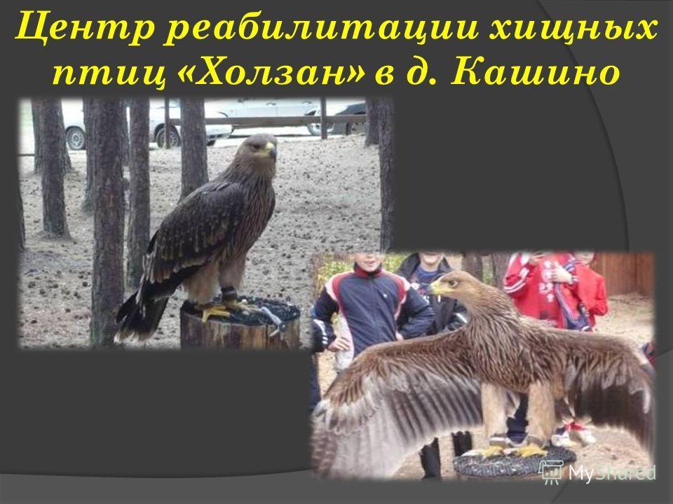 Центр реабилитации хищных птиц «Холзан» в д. Кашино