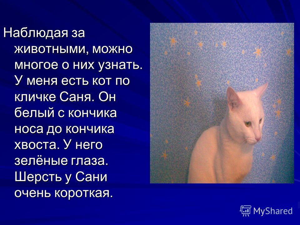 Наблюдая за животными, можно многое о них узнать. У меня есть кот по кличке Саня. Он белый с кончика носа до кончика хвоста. У него зелёные глаза. Шерсть у Сани очень короткая.