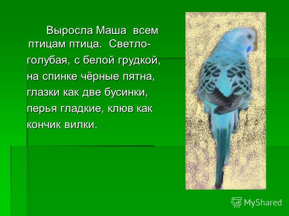 Выросла Маша всем птицам птица. Светло- голубая, с белой грудкой, голубая, с белой грудкой, на спинке чёрные пятна, на спинке чёрные пятна, глазки как две бусинки, глазки как две бусинки, перья гладкие, клюв как перья гладкие, клюв как кончик вилки.