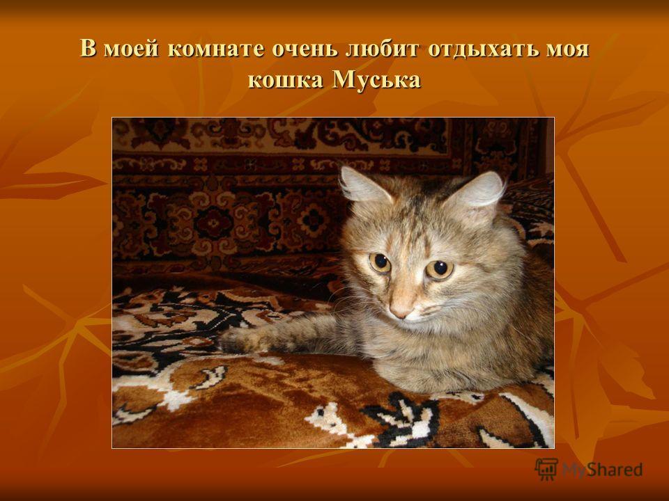В моей комнате очень любит отдыхать моя кошка Муська