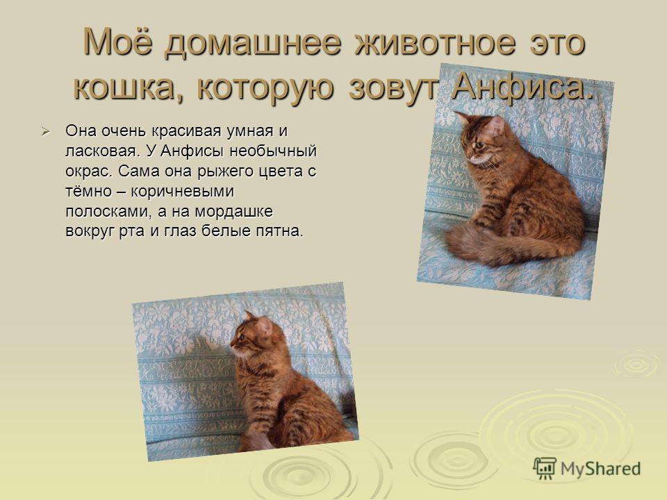 Моё домашнее животное это кошка, которую зовут Анфиса. Она очень красивая умная и ласковая. У Анфисы необычный окрас. Сама она рыжего цвета с тёмно – коричневыми полосками, а на мордашке вокруг рта и глаз белые пятна. Она очень красивая умная и ласко