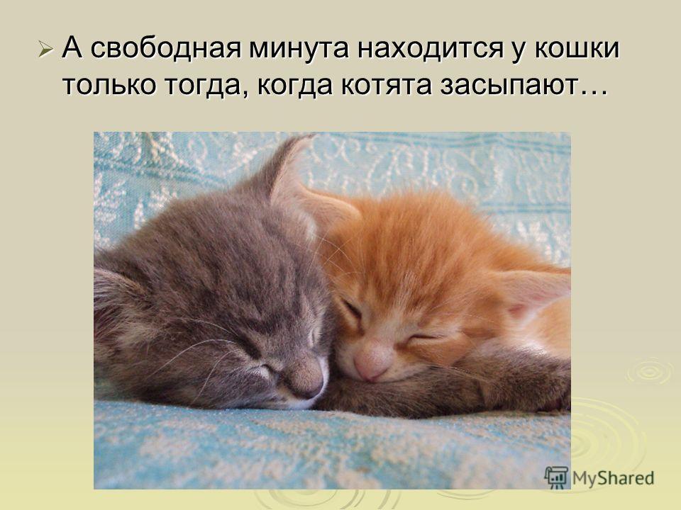 А свободная минута находится у кошки только тогда, когда котята засыпают…