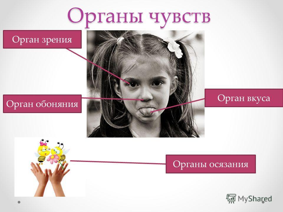 Органы чувств. Слух. 2 класс педагогическая система развивающего обучения Л.В.Занкова