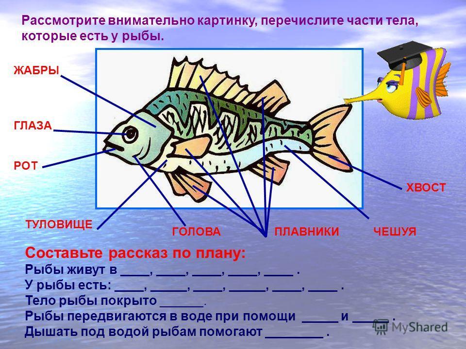 Рассмотрите внимательно картинку, перечислите части тела, которые есть у рыбы. ПЛАВНИКИ ХВОСТ ТУЛОВИЩЕ ЖАБРЫ ГЛАЗА РОТ Составьте рассказ по плану: Рыбы живут в ____, ____, ____, ____, ____. У рыбы есть: ____, _____, ____, _____, ____, ____. Тело рыбы