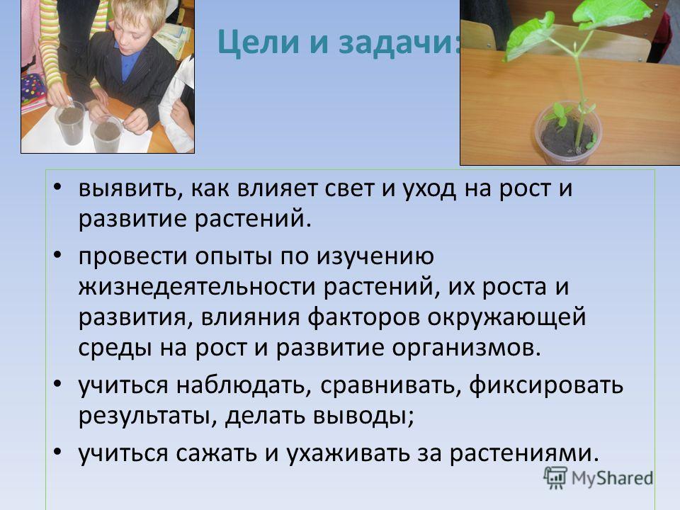 Цели и задачи: выявить, как влияет свет и уход на рост и развитие растений. провеcти опыты по изучению жизнедеятельности растений, их роста и развития, влияния факторов окружающей среды на рост и развитие организмов. учиться наблюдать, сравнивать, фи