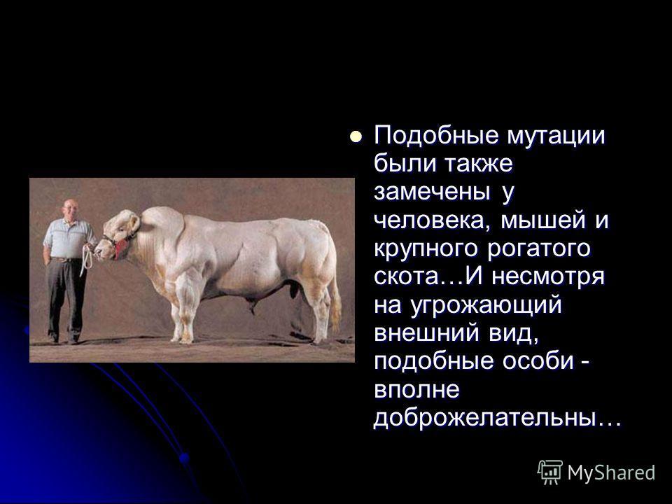 Подобные мутации были также замечены у человека, мышей и крупного рогатого скота…И несмотря на угрожающий внешний вид, подобные особи - вполне доброжелательны…