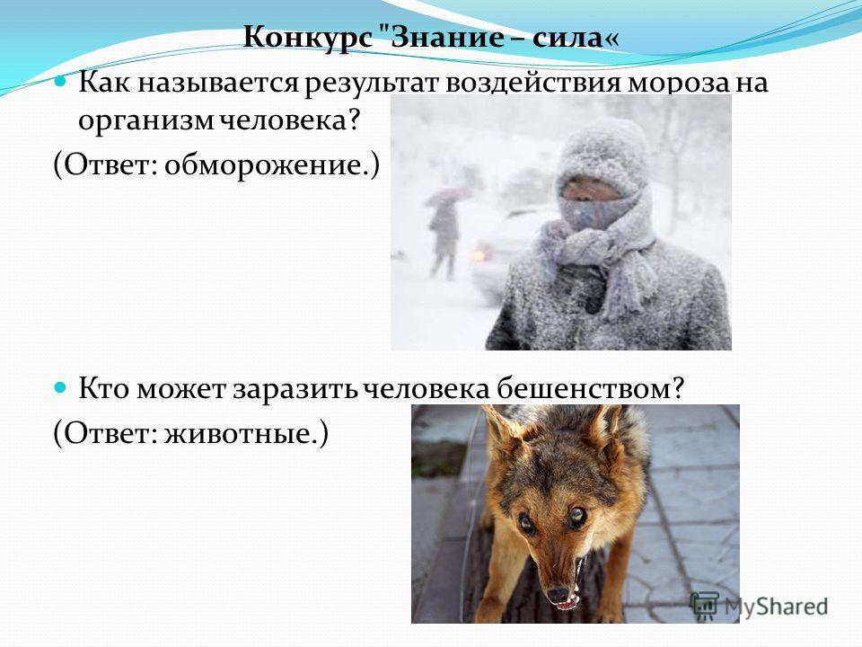 Конкурс Знание – сила« Как называется результат воздействия мороза на организм человека? (Ответ: обморожение.) Кто может заразить человека бешенством? (Ответ: животные.)