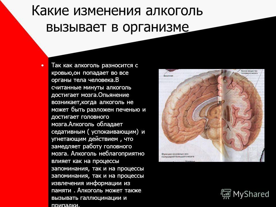 Какие изменения алкоголь вызывает в организме Так как алкоголь разносится с кровью,он попадает во все органы тела человека.В считанные минуты алкоголь достигает мозга.Опьянение возникает,когда алкоголь не может быть разложен печенью и достигает голов