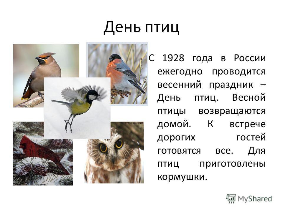 День птиц С 1928 года в России ежегодно проводится весенний праздник – День птиц. Весной птицы возвращаются домой. К встрече дорогих гостей готовятся все. Для птиц приготовлены кормушки.