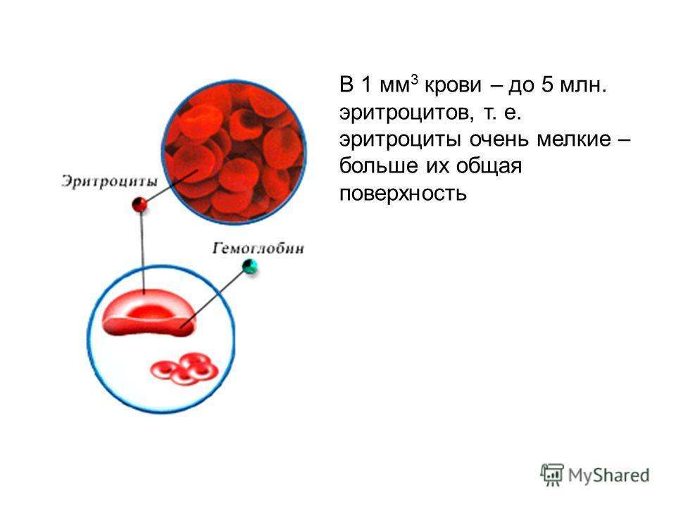 В 1 мм 3 крови – до 5 млн. эритроцитов, т. е. эритроциты очень мелкие – больше их общая поверхность