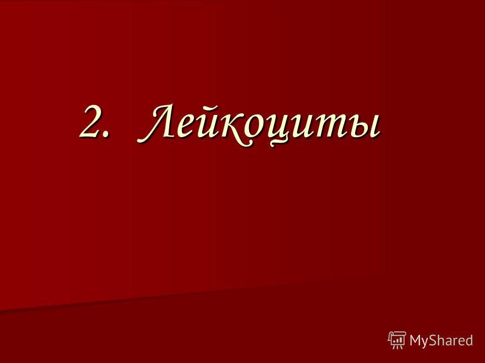 2.Л ейкоциты