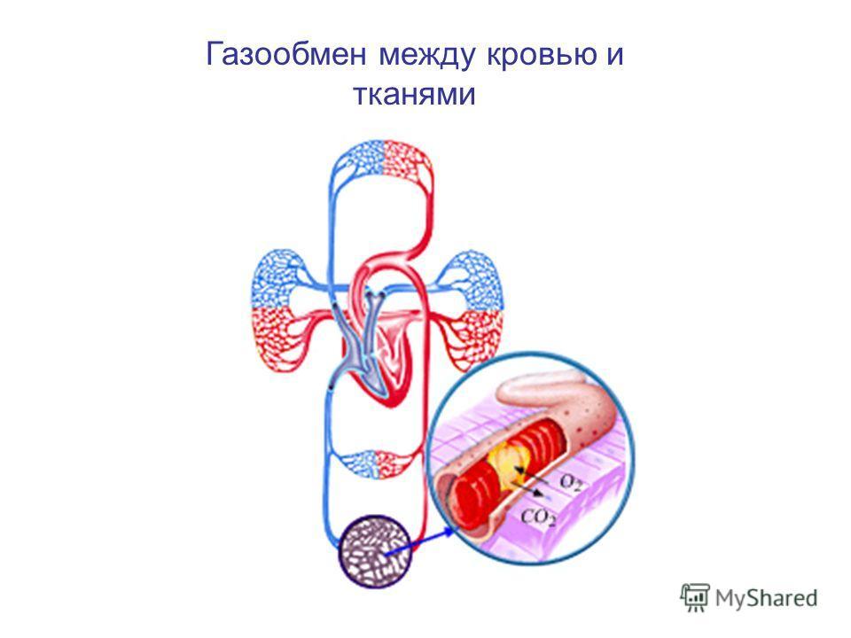 Газообмен между кровью и тканями