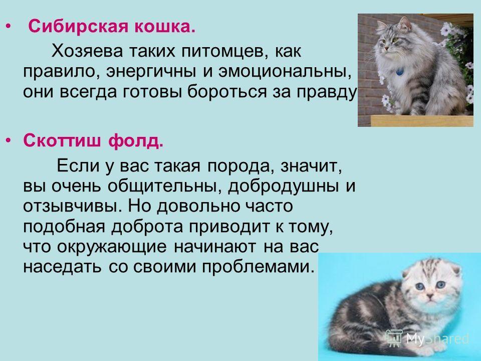 Сибирская кошка. Хозяева таких питомцев, как правило, энергичны и эмоциональны, они всегда готовы бороться за правду. Скоттиш фолд. Если у вас такая порода, значит, вы очень общительны, добродушны и отзывчивы. Но довольно часто подобная доброта приво
