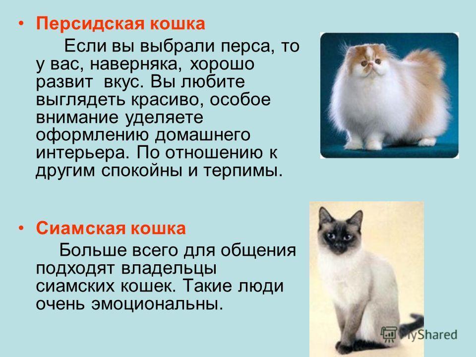 Персидская кошка Если вы выбрали перса, то у вас, наверняка, хорошо развит вкус. Вы любите выглядеть красиво, особое внимание уделяете оформлению домашнего интерьера. По отношению к другим спокойны и терпимы. Сиамская кошка Больше всего для общения п