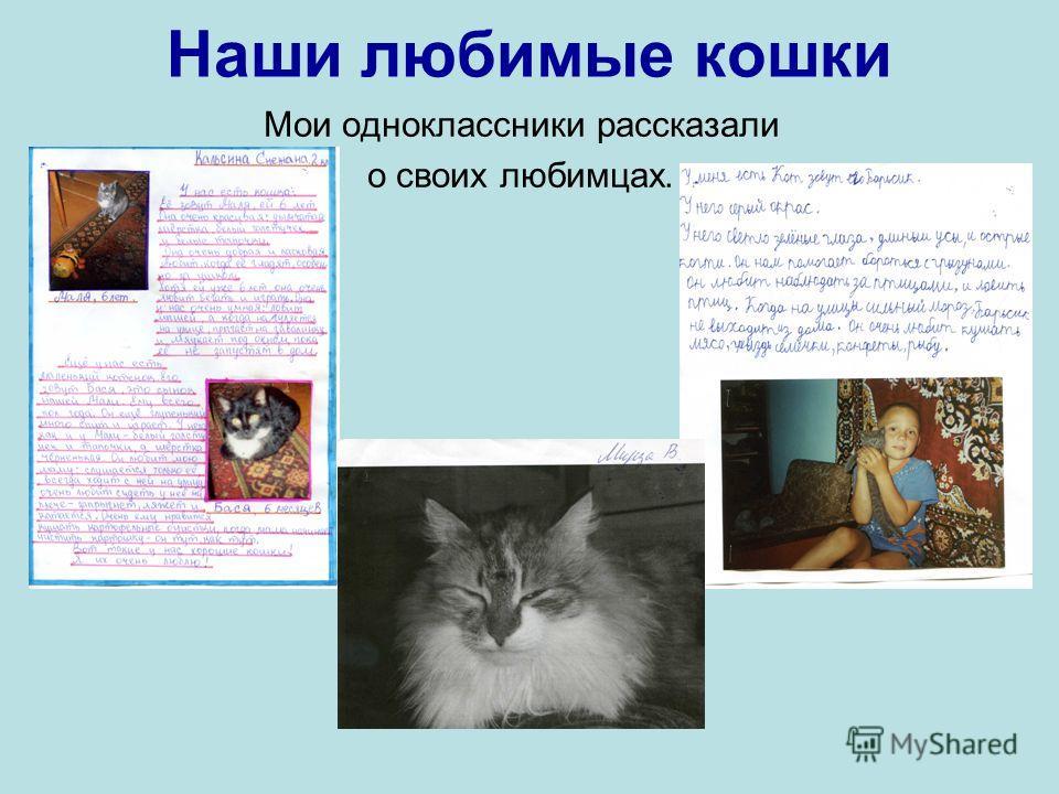 Наши любимые кошки Мои одноклассники рассказали о своих любимцах.