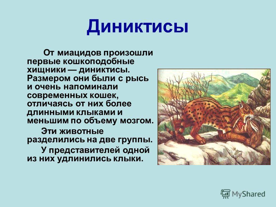 Диниктисы От миацидов произошли первые кошкоподобные хищники диниктисы. Размером они были с рысь и очень напоминали современных кошек, отличаясь от них более длинными клыками и меньшим по объему мозгом. Эти животные разделились на две группы. У предс