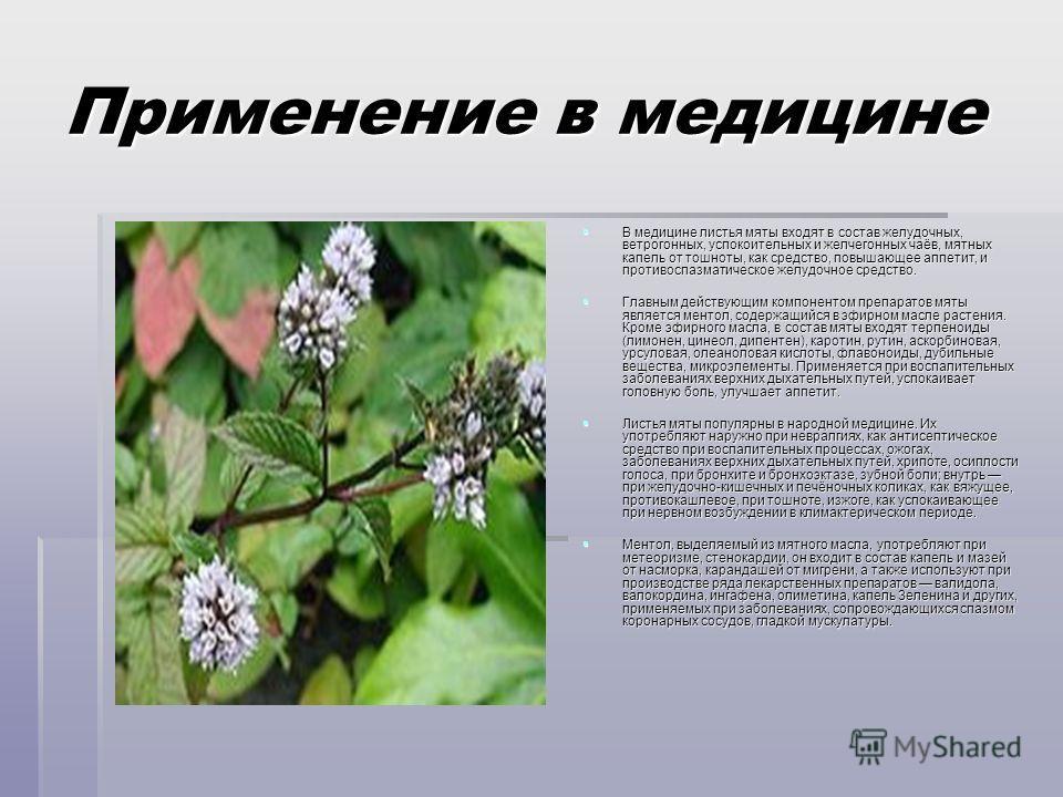 Применение в медицине В медицине листья мяты входят в состав желудочных, ветрогонных, успокоительных и желчегонных чаёв, мятных капель от тошноты, как средство, повышающее аппетит, и противоспазматическое желудочное средство. Главным действующим комп
