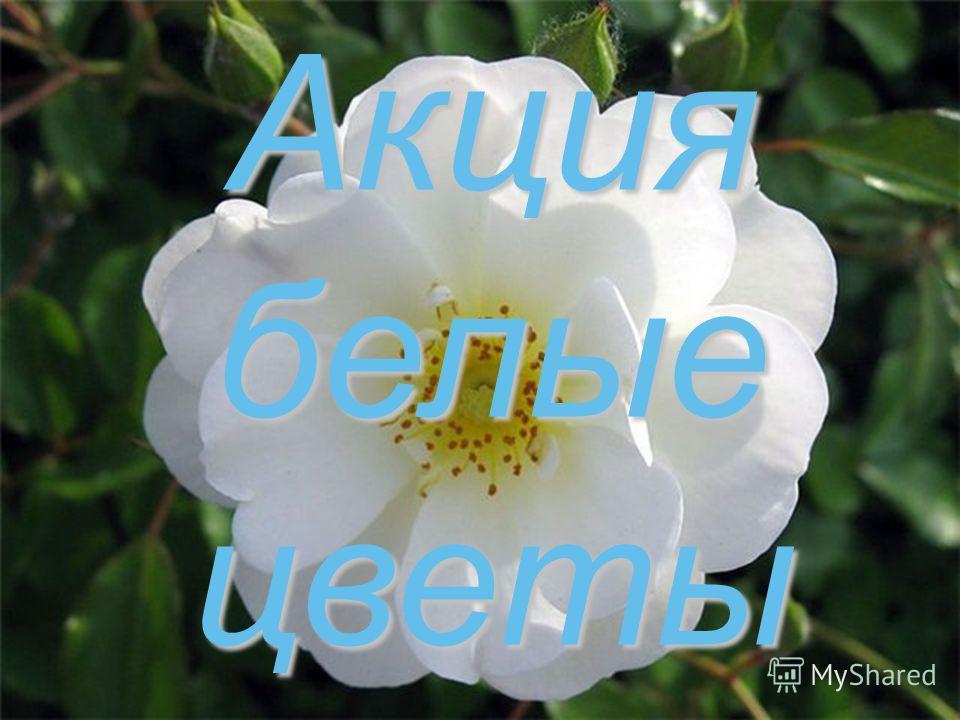 Акция белые цветы