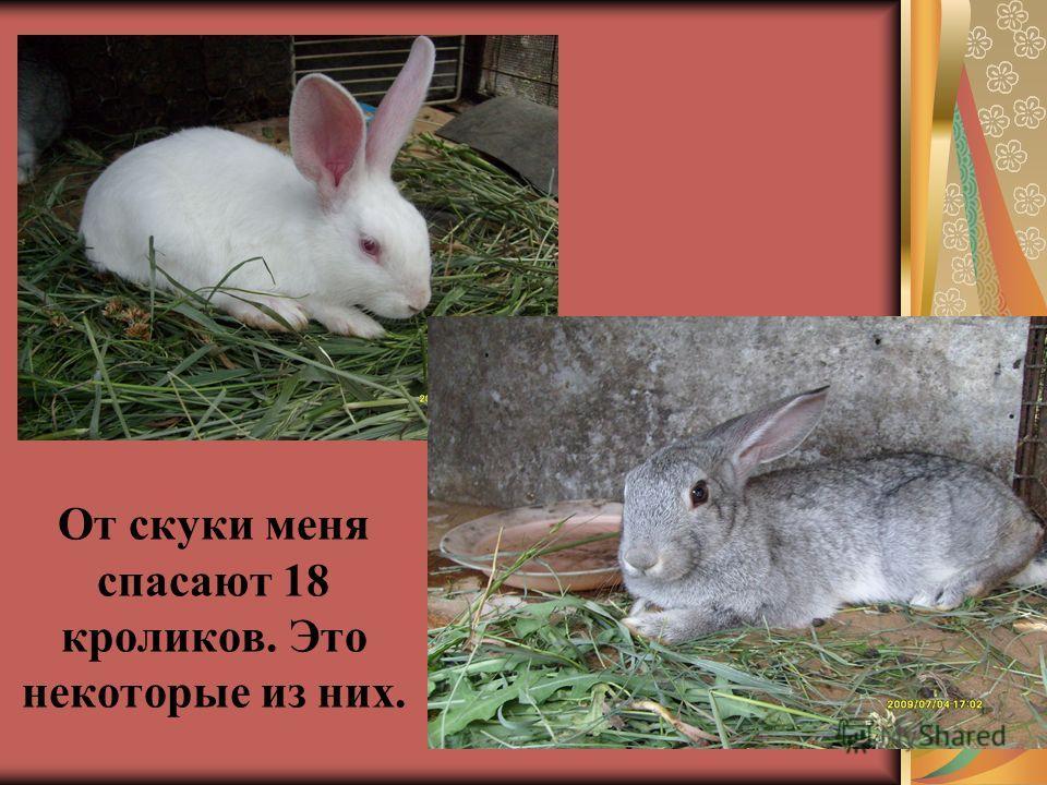 От скуки меня спасают 18 кроликов. Это некоторые из них.