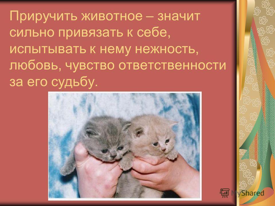 Приручить животное – значит сильно привязать к себе, испытывать к нему нежность, любовь, чувство ответственности за его судьбу.