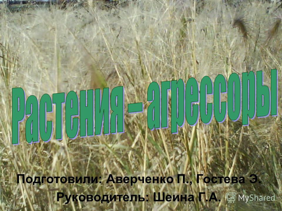 Подготовили: Аверченко П., Гостева Э. Руководитель: Шеина Г.А.