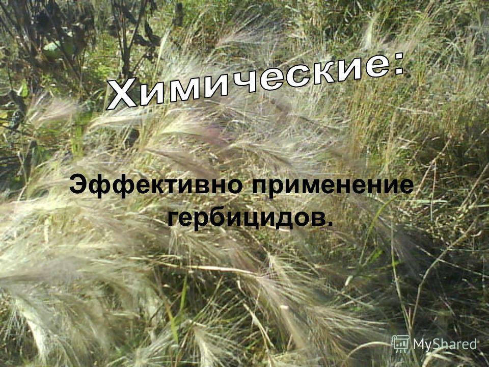 Эффективно применение гербицидов.