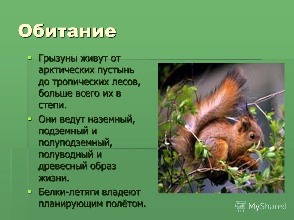 Обитание Грызуны живут от арктических пустынь до тропических лесов, больше всего их в степи. Грызуны живут от арктических пустынь до тропических лесов, больше всего их в степи. Они ведут наземный, подземный и полуподземный, полуводный и древесный обр