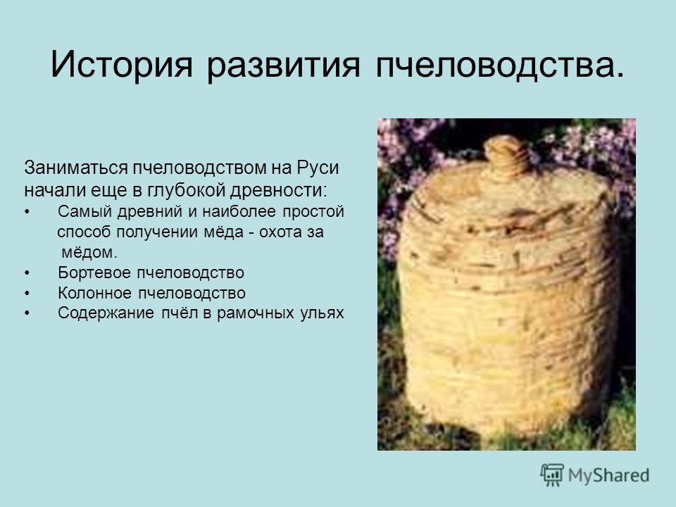 История развития пчеловодства. Заниматься пчеловодством на Руси начали еще в глубокой древности: Самый древний и наиболее простой способ получении мёда - охота за мёдом. Бортевое пчеловодство Колонное пчеловодство Содержание пчёл в рамочных ульях