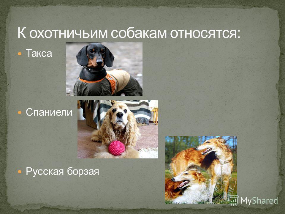 Такса Спаниели Русская борзая