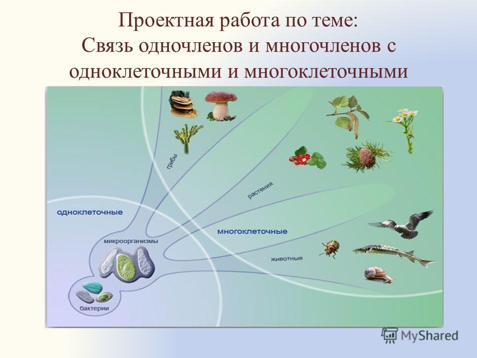Проектная работа по теме: Связь одночленов и многочленов с одноклеточными и многоклеточными